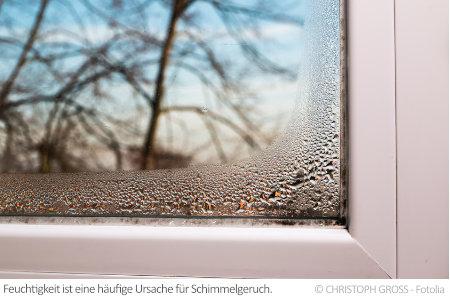 Feuchtigkeit wie an diesem Fenster ist oft ein Zeichen für schlechte Lüftung oder Isolierung. Dies fördert Schimmelgeruch.