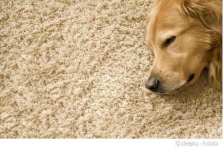 Naturteppich sind häufig emissionsarm. Hierbei sollten Sie auf entsprechende Siegel achten.