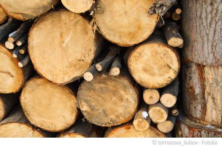 Holz in der Wohnung ist oft mit Schadstoffen belastet.